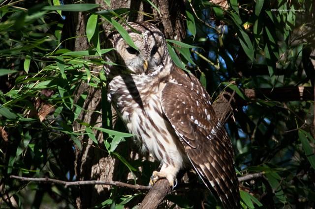 owl-2106_900