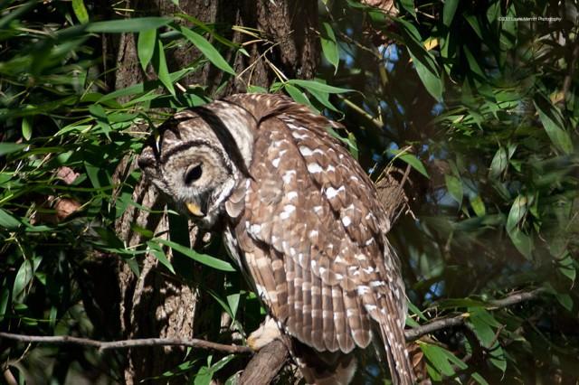 owl-2111_900