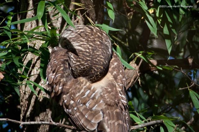 owl-2118_900