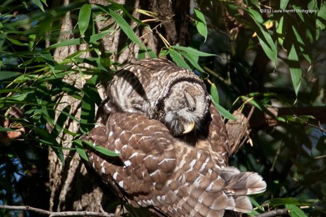 owl-2123_900