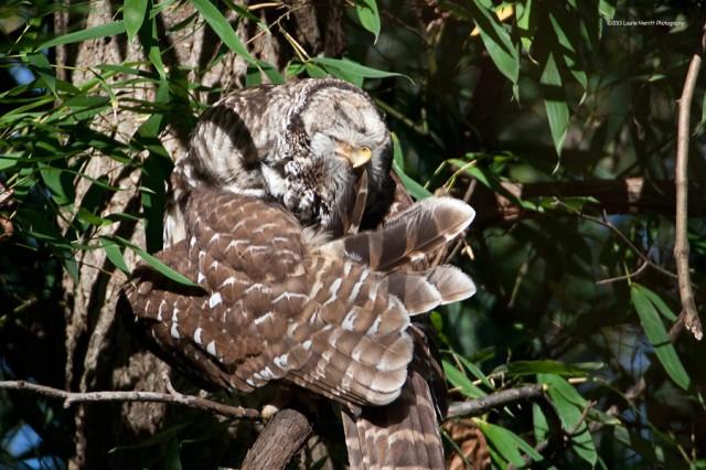 owl-2125_900