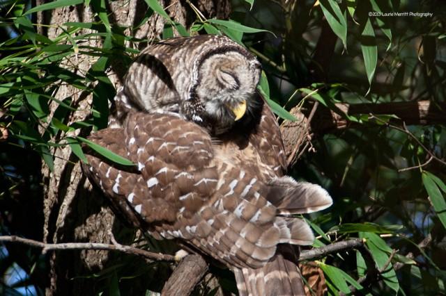 owl-2126_900