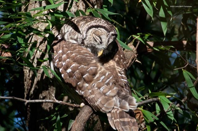 owl-2134_900