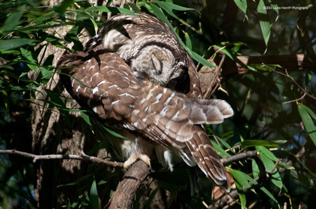 owl-2137_900