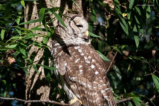 owl-2144_900