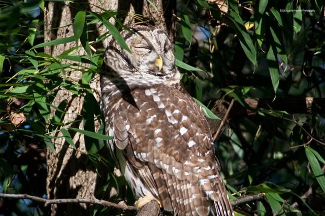 owl-2151_900