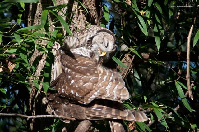owl-2157_900