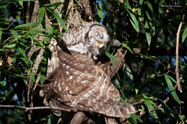 owl-2158_900