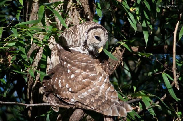 owl-2159_900