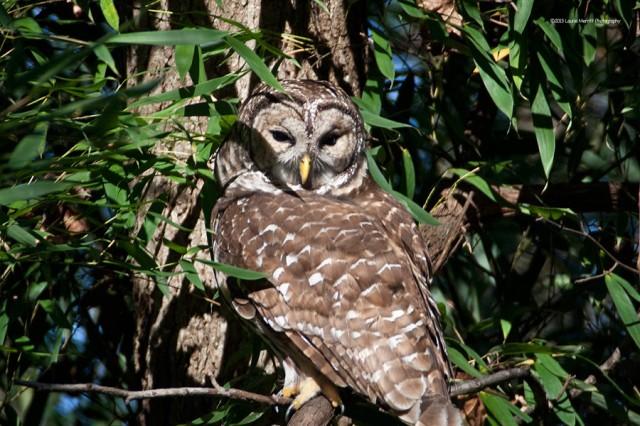 owl-2161_900