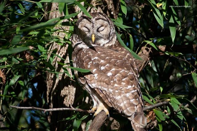 owl-2162_900