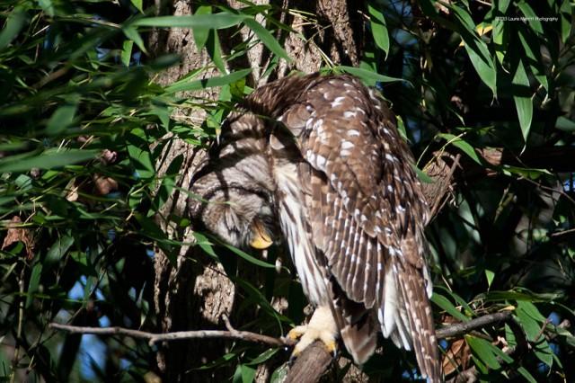 owl-2163_900