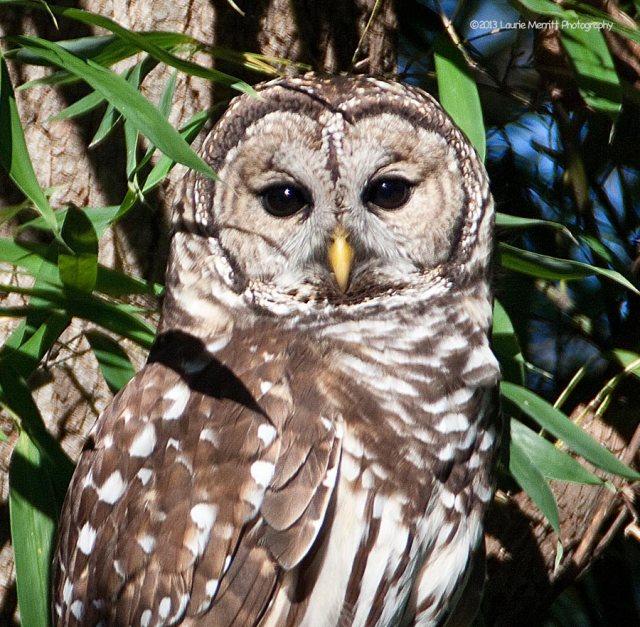 owl-2178_900_2