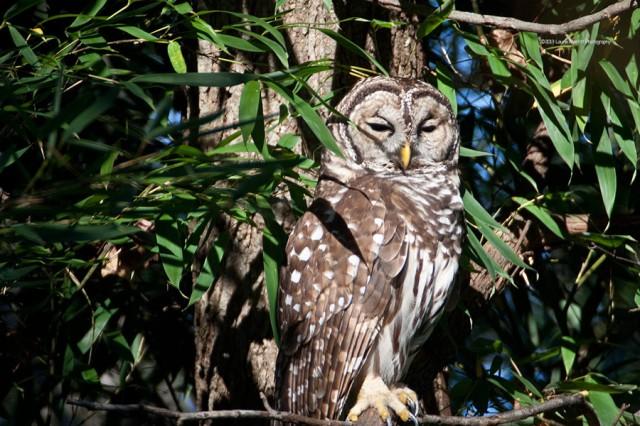 owl-2179_900
