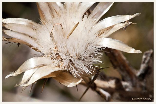 flowercanvas_900