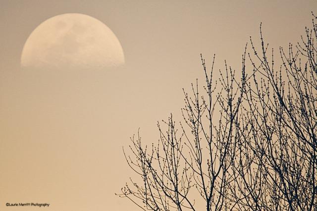 moon-4863_2_900
