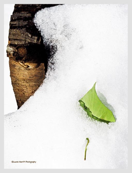 snow-2818_900_cv