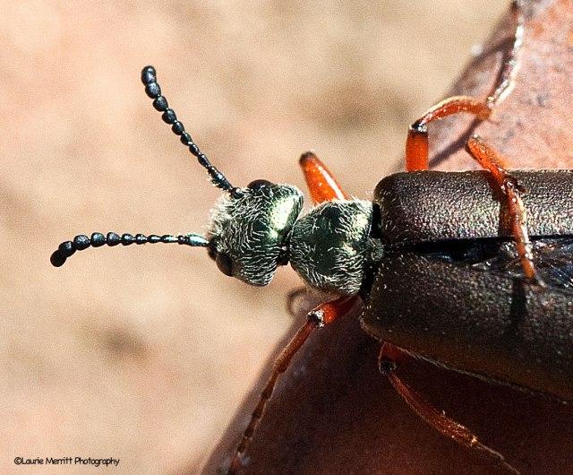 beetle-6422_900