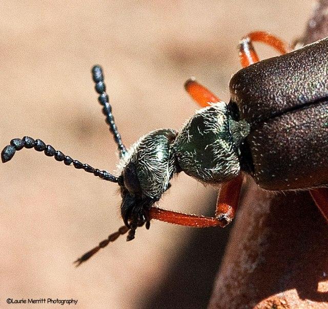 beetle-6429_900