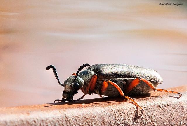 beetle1-69-72_900