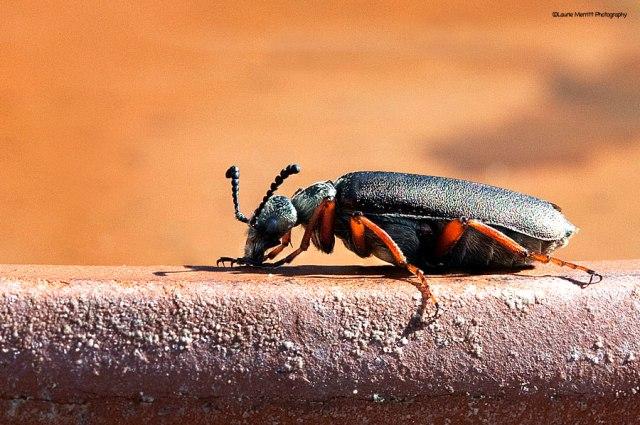 beetle2-75-78_900