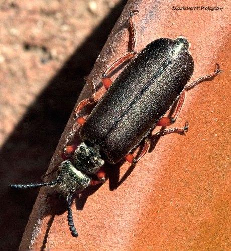 beetle5-52-68_900