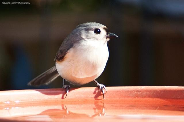 birdbath-4696_900