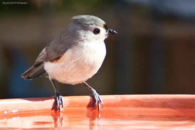 birdbath-4701_900
