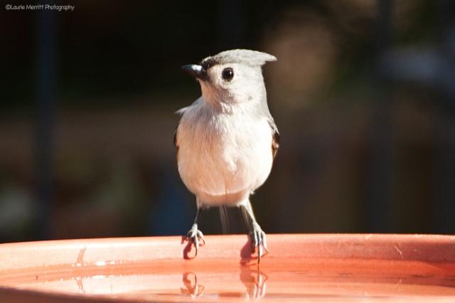 birdbath-4716_900
