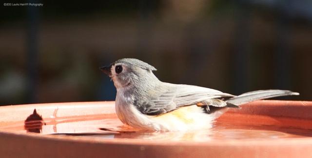 birdbath-4722_900