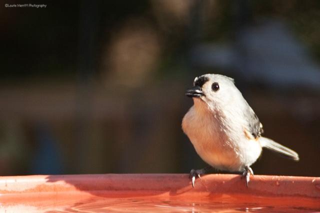birdbath-4728_900