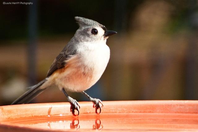 birdbath-4737_900