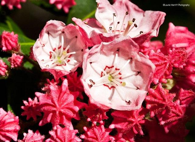 flowers-6951_900