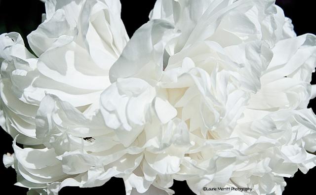 flowers-7103_900
