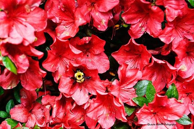 flowers-7128_900