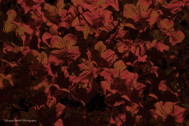 flowers-7169_3_900