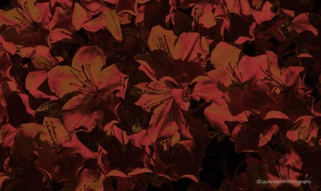 flowers-7169_3crop2_900