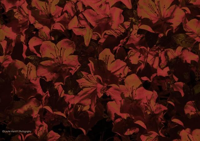 flowers-7169_3crop_900