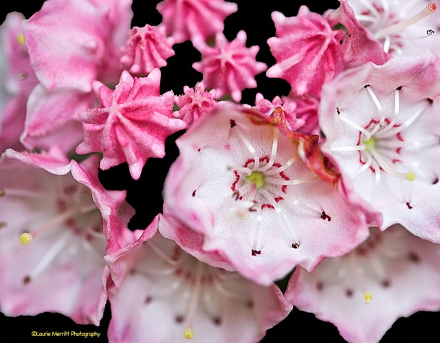 flowers-7203_900