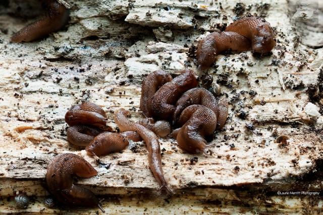 slugs3_06-12_900