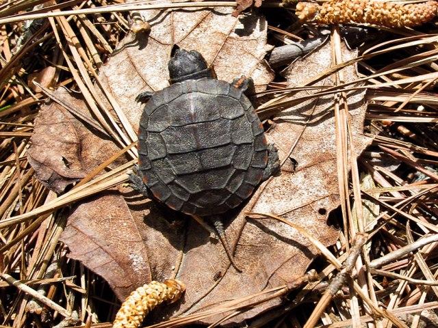 turtle-3447_900