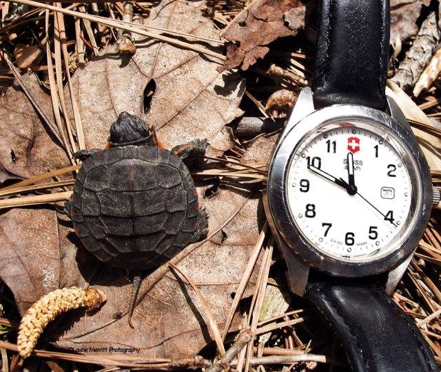 turtle-3449_900