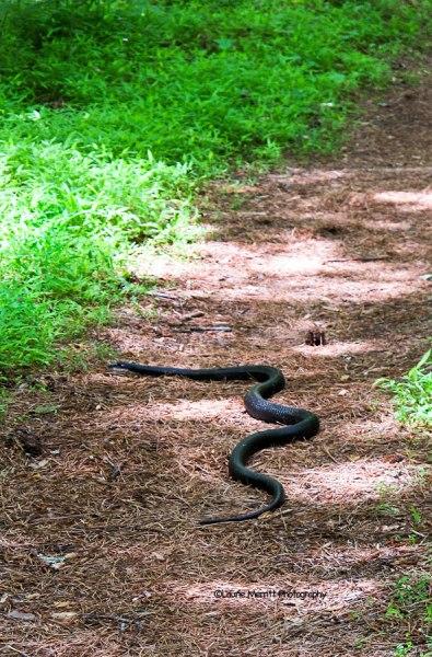 snake-3668_900