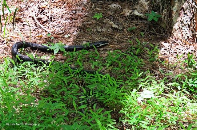 snake-3671_900