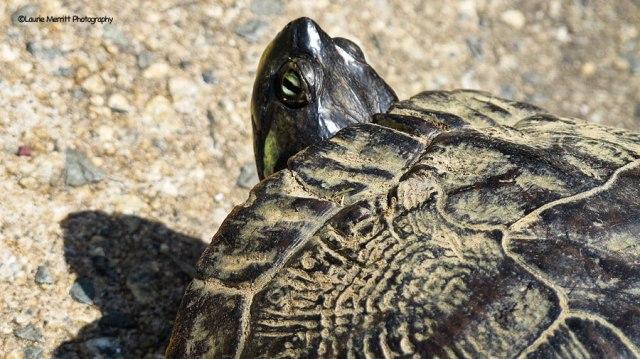 turtle-3706_900